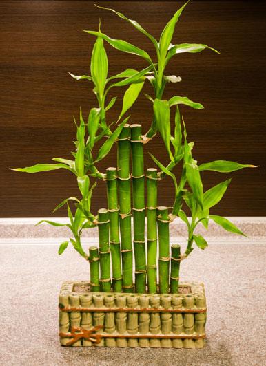 bamboo-feng-shui