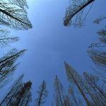 Feng-Shui-Spiritual-Presence-Trees-sky